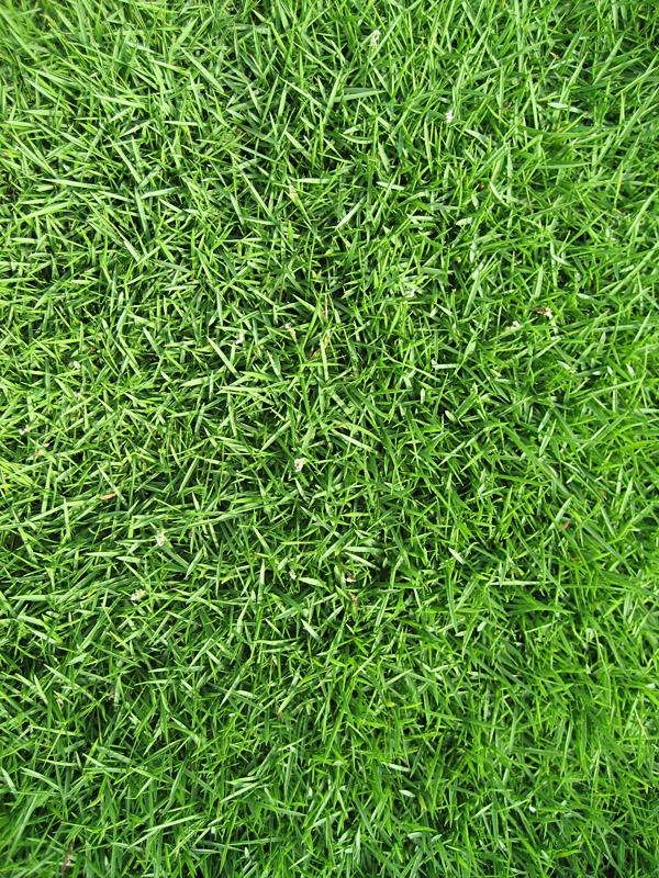 buffalo grass – It's a Gruene Thing